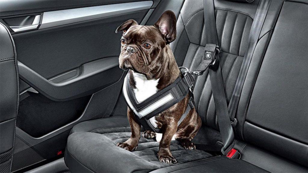 Как собака в машине влияет на водителя